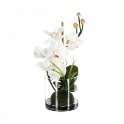 Composition d'orchidées blanches avec vase en verre H32cm